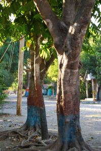 trees in maissade