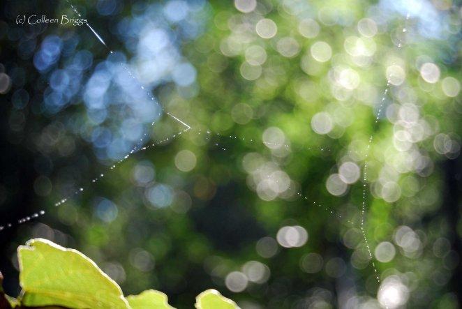 spider web lo res copy