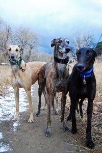 3 hounds 5