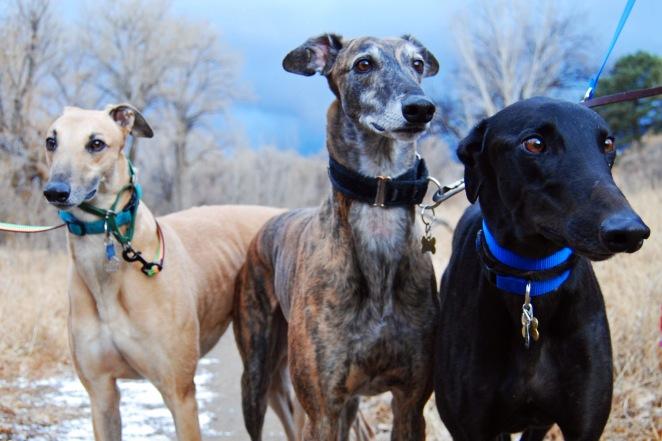 3 hounds 6