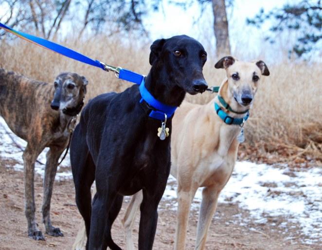 3 hounds 9